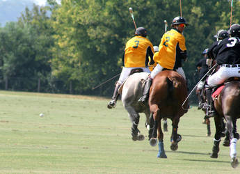 Polo II by somethingstrung