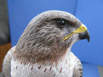 Red Tailed Hawk 3 by Bagheera3
