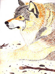 wolf by ina