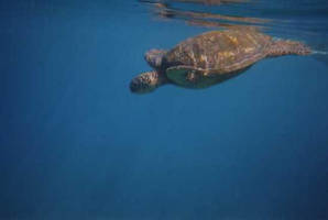 Turtles in the Deep by Zargata
