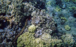 Eels in the Deep by Zargata