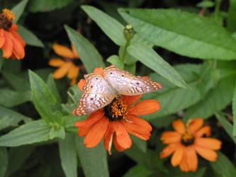 Unknown Butterfly by tlangston28