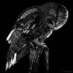 Owl by jeeberpow