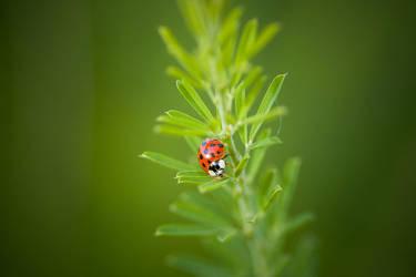 ladybug. by thespook