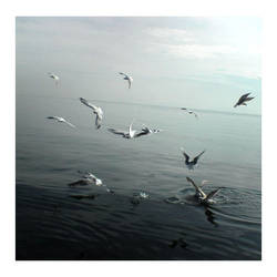 sea gulls by angelous03