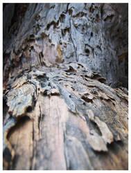 treebark by Rainfeather