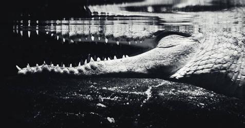 crocodile jaws by Rainfeather