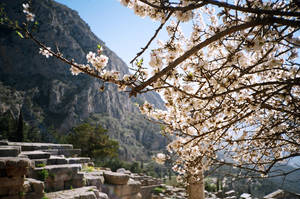 Ancient Delphi by Sarahlin