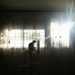 Morning flares by motagirl2