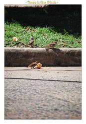 Three Little Birds by Bonfire22