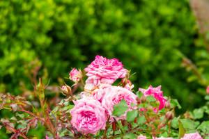 Flowering by AaronMk