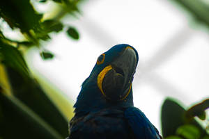 Macaw by AaronMk