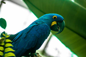Macaw2 by AaronMk