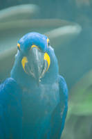 Macaw3 by AaronMk