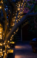 Lighted pathway by AaronMk