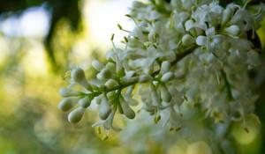 Flowers by AaronMk