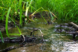 Streamlet by AaronMk