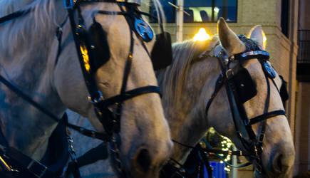 Sleigh Horses by AaronMk