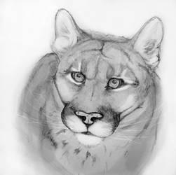 Cougar by Rayzerwolf