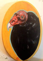 Turkey Vulture by ckrickett