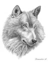 Sorrowful wolf by CalciteMink1610