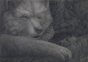 Bear's Portrait by CalciteMink1610