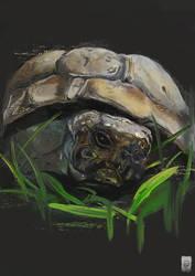 Portrait study of my tortoise Bob by Russtiel