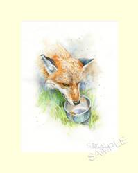 Vale Wildlife Series: MEGAN THE FOX by SteveDeLaMare