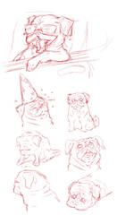 Pug sketches by Tijopi11