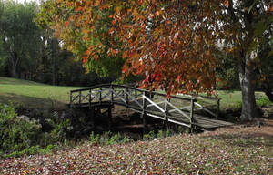 Autumn Stroll by CeeJ49er