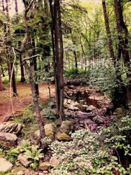 Eifelforest by Doktorheil