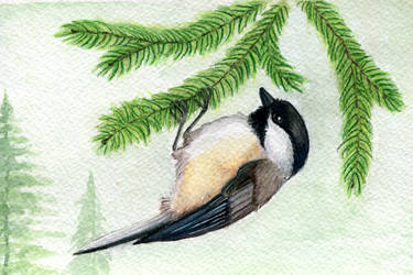 Black-capped Chickadee by twapa