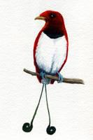 King Bird-of-Paradise by twapa