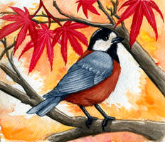 Varied Tit Autumn by twapa