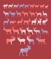 Types of Deers. by twapa
