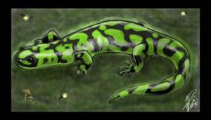 Secret Salamander by twapa