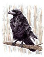 Raven request by twapa