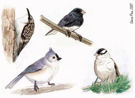 Little Fat Birds by twapa