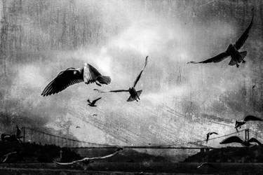 Seagulls of Bosphorus by Canankk