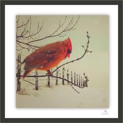 Tell Me Little Bird by Canankk