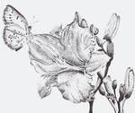 Stippled Flower by leftinthemiddle