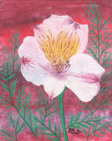 Pink Lilly by KatelijnVanMunster