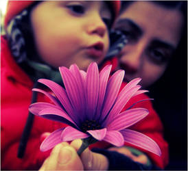 Flower by marinaaniram
