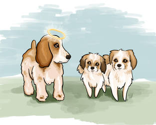 Spaniel and Shih Tzus by iixRainexii