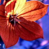 the orange one. by Naynaa
