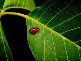 beetle by jacobreisek