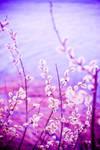 pinkNature2 by hellonata
