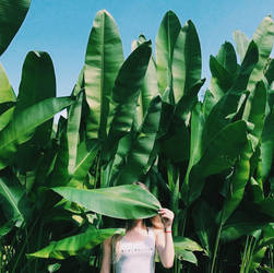 The Tropic Mood by hellonata
