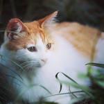 Cat 0927 by bai917