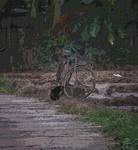 Old Bike by jennystokes